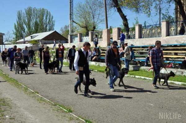 В Николаеве более 100 собак приняли участие в выставке памяти известного кинолога  http://novosti-mk.org/events/5350-v-nikolaeve-bolee-100-sobak-prinyali-uchastie-v-vystavke-pamyati-izvestnogo-kinologa.html  В воскресенье, 30 апреля, в Николаеве, на стадионе «Юность» состоялась выставка собак, на которую зарегистрировалось более 100 участников. В рамках выставки, также состоялся чемпионат по породам: Среднеазиатская овчарка и Йоркширский терьер.  #Николаев #Nikolaev {{AutoHashTags}}