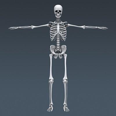 best 20+ human skeleton 3d ideas on pinterest   human skeleton, Skeleton