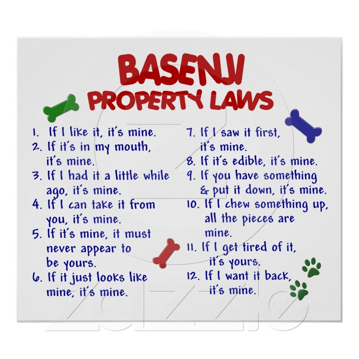 BASENJI Property Laws
