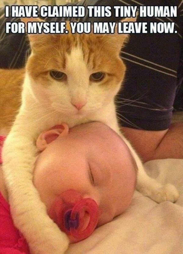 Best Funny Cats: 17 Funny Cats That Will Make You Smile.