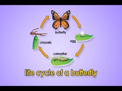 Life Cycle Of A Butterfly | Metamorphosis | Metamorphosis Song | Jack Hartmann - YouTube