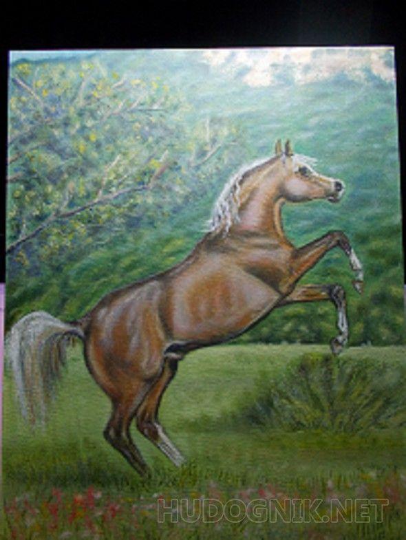 Игреневый Арабский конь резвится на свободе.