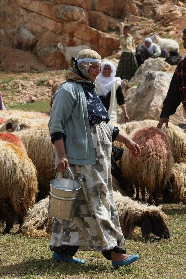 Milking time in box canyon close to #Mardin, #Turkey