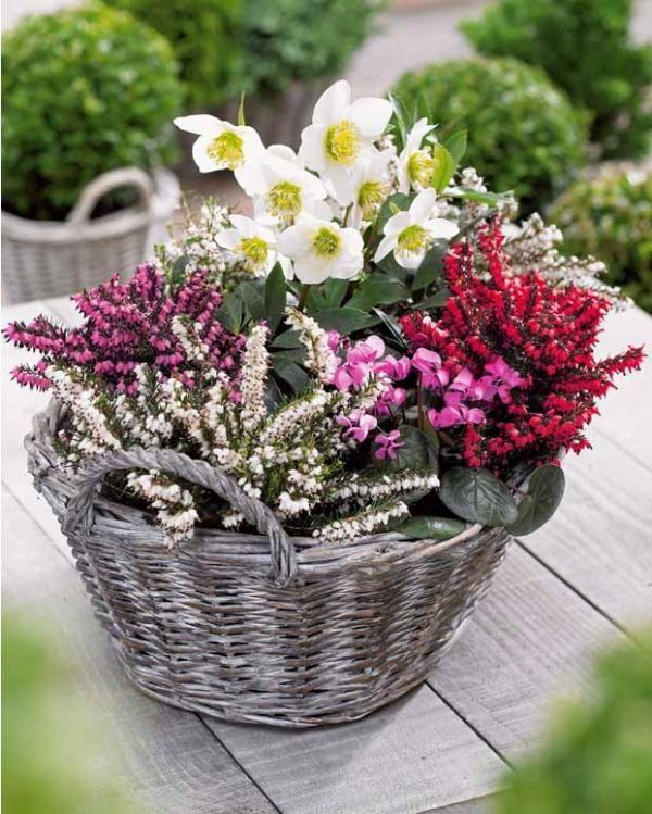 17 meilleures id es propos de pots d 39 ext rieur de no l for Plantes fleuries exterieur en pot