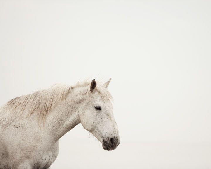 Wild Horse Print #witcherywishlist
