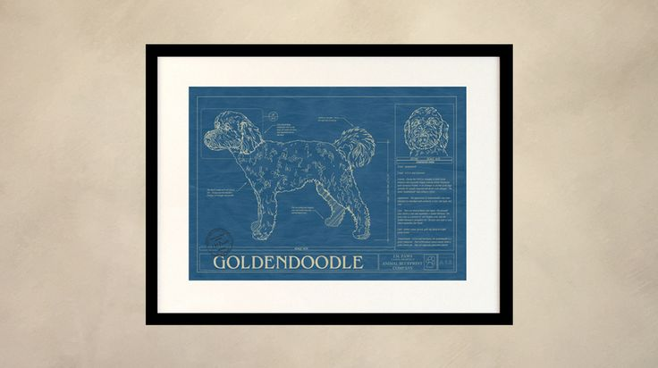 Rendered in the original format of a working blueprint, this unique wall  art features the Goldendoodle drawn in detail along with factual  information that makes that breed special. This unique blueprint is the  perfect wall art or gift for Goldendoodle lovers and owners.  Museum quality print in archival acid free matte board.All framing is 100%  poplar wood and made in the USA.  The Animal Blueprint Company Guarantee: We're so sure you'll love your Animal Blueprint that we offer a…