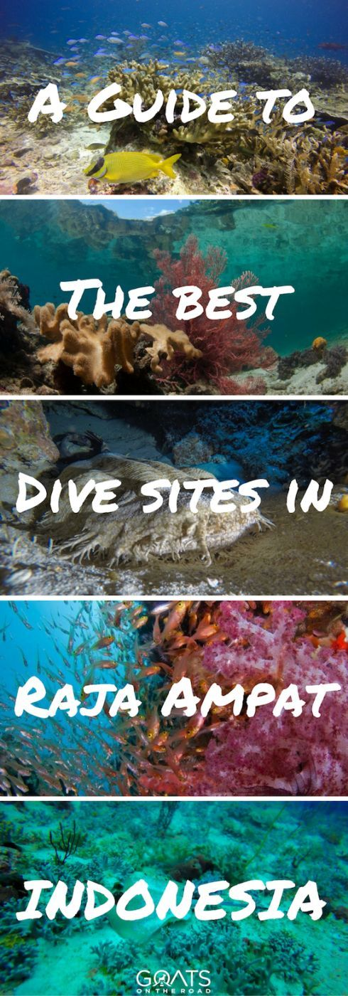 Guide To Diving In Raja Ampat | The Best Dive Spot In The World | Island Hopping In Indonesia | Cost Of Travel Raja Ampat | #divingislands #coralreef #westpapua #worldbestdiving #discoverindonesia #paradise #wonderfulindonesia #honeymoon #travelinspiration #indonesiadiving