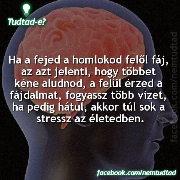 https://www.facebook.com/musicfmhungary/photos/a.246576912086633.57233.243310589079932/901289389948712/?type=3