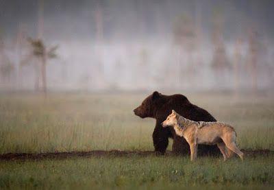 Pensieri senza nome: L'incredibile amicizia tra un orso e un lupo