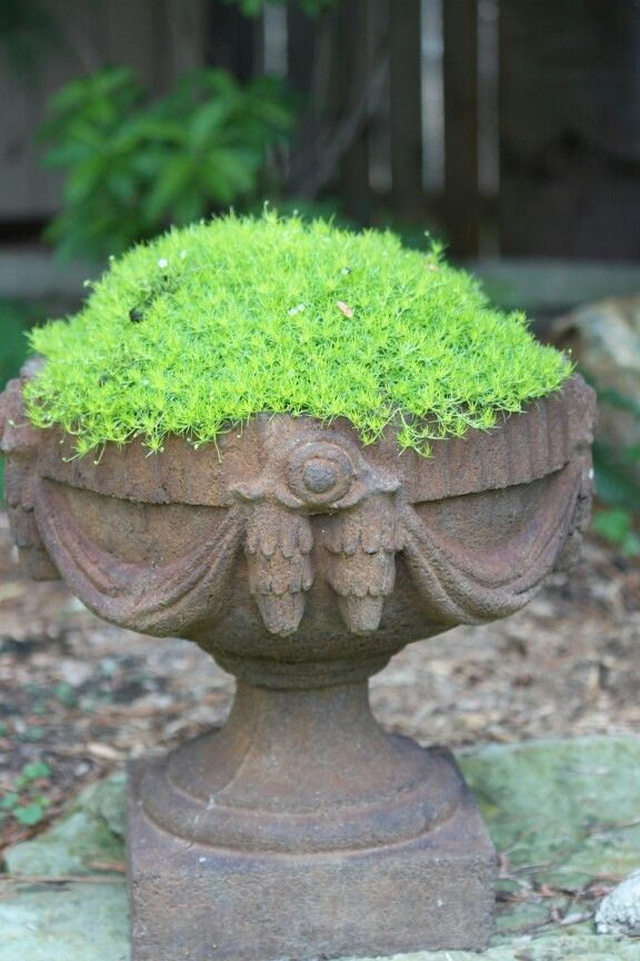 Scottish moss in one of my favorite pots
