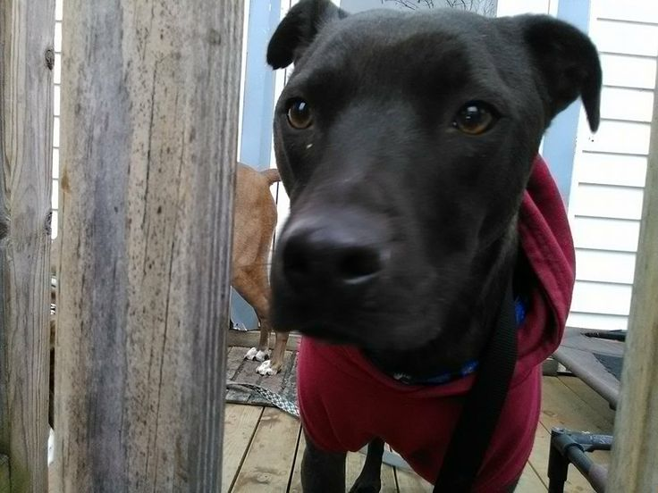 Silas is an adoptable 3 year old boy.