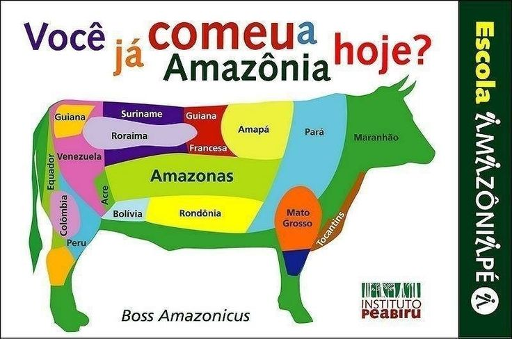 O mau uso da terra pela pecuária bovina extensiva na #Amazônia é a principal causa da contribuição brasileira para o aquecimento global e corresponde a mais de 85% do desmatamento da #floresta #Amazon,#rainforest, #deforestation,#meat,#vegan