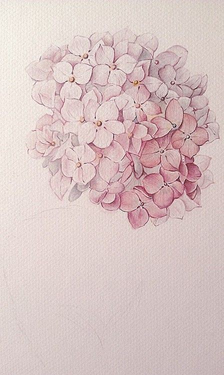 vintage tattoo inspiration: Hydrangea watercolor