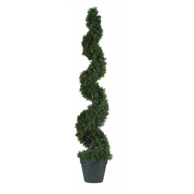 4u0027 cedar spiral silk tree - Silk Trees