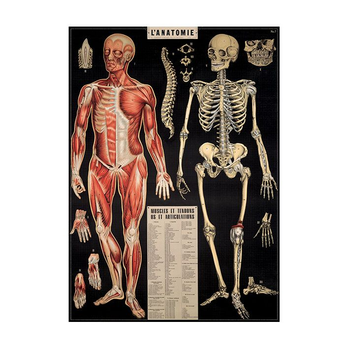 Poster_Anatomie_medical_art_and_more