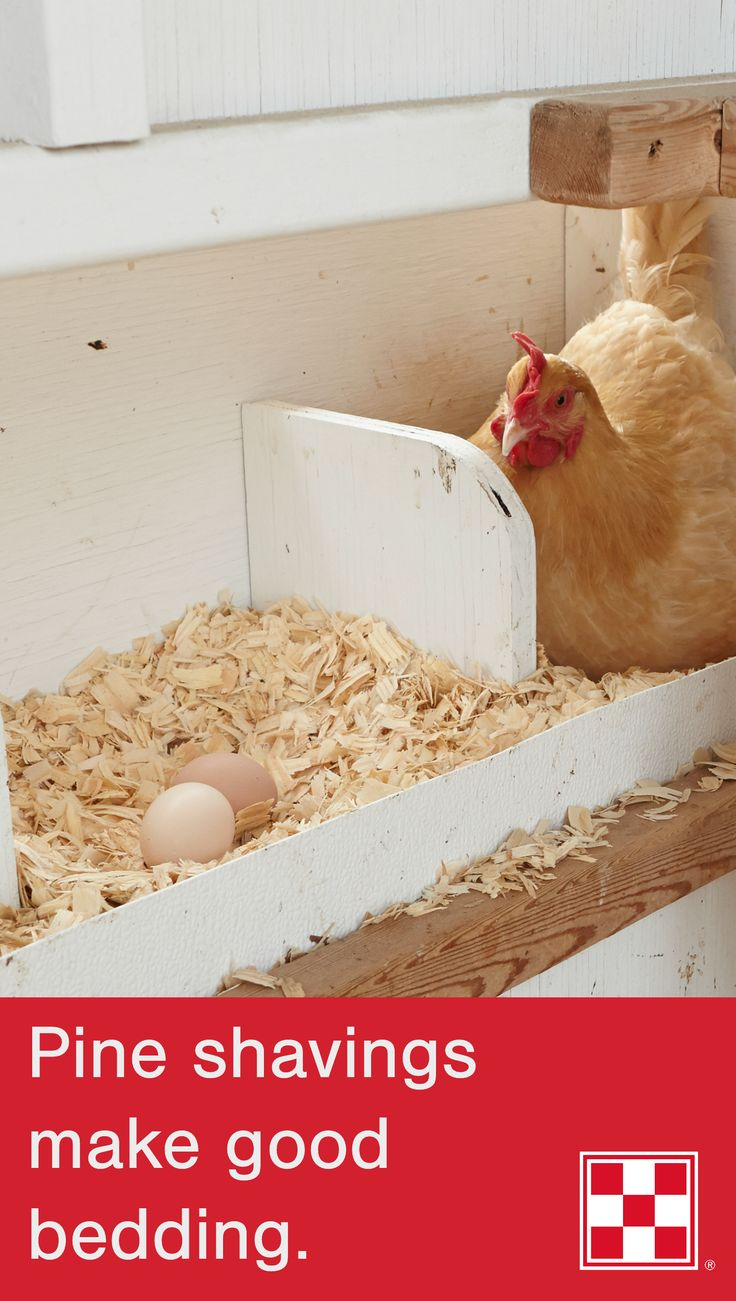 What type of bedding is best for the chicken coop?   For the 12 coops on our farm in Missouri, we use pine shavings because they do not have a strong smell (like cedar) and do not create dust (like sawdust). Click to learn more laying season tips.