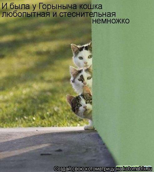 И была у Горыныча кошка любопытная и стеснительная немножко...