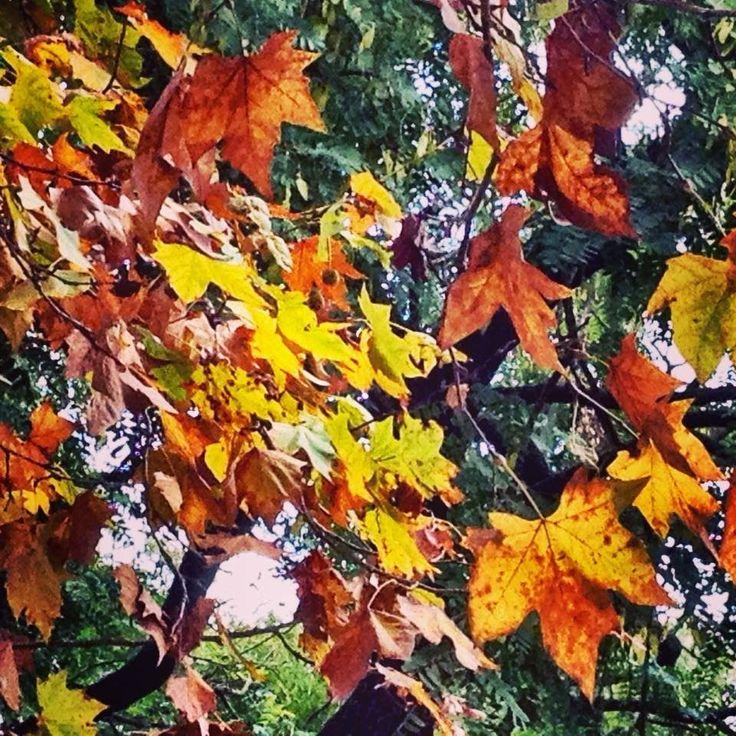 Poesia da Natureza: Matizes Outonais