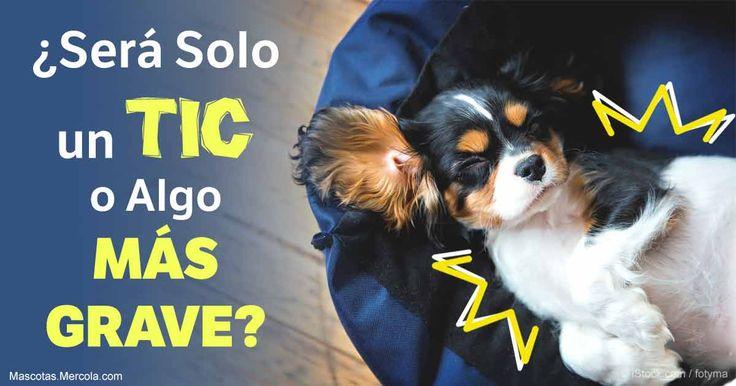 Muchas cosas puedan causar una convulsión en los perros, incluyendo las toxinas, tratamientos contra las pulgas, infecciones, tumores y traumas en la cabeza.