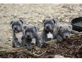 Would love a blue staff to be iggys buddy