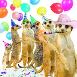 grappige verjaardagskaarten