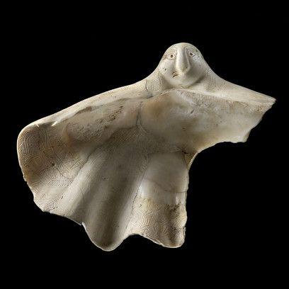 Coquillage à motifs gravés - Tridacna squamosa (mollusque bivalve vivant dans la…