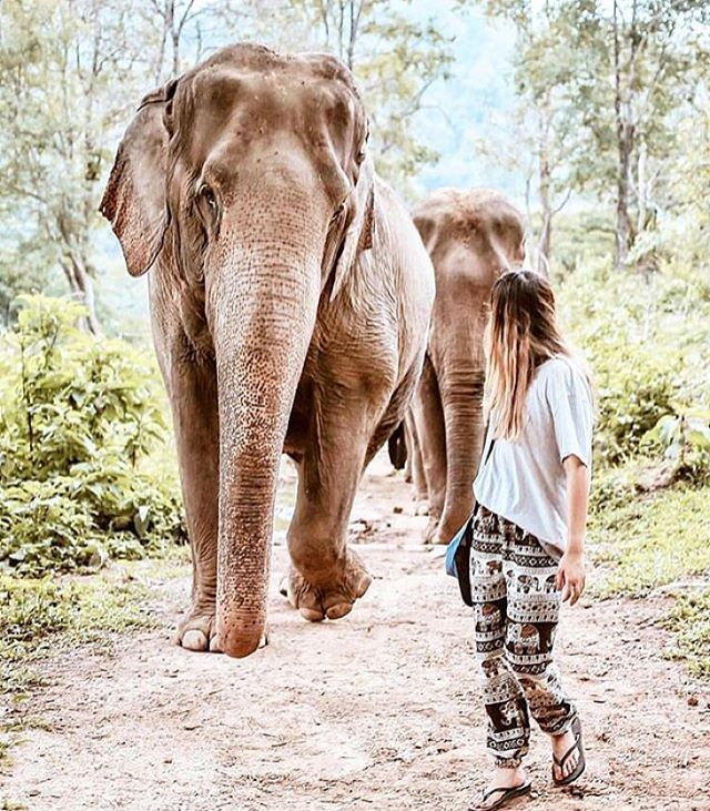 "-  Chiang Mai, Thailand @carmelisse - ""The Elephant Sanctuary in Chiang Mai is an ecotourism park and wildlife sanctuary dedicated to the survival and development of Thai elephants. #Backpackerstory -  Apply on  Facebook.com/backpackerstory for a FEATURE"
