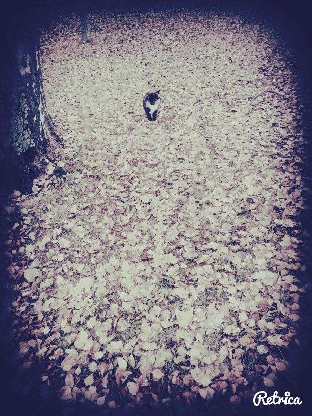 Cats autumn (: