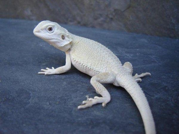 29 Best Crazy Dragon Lady Images On Pinterest Dragon