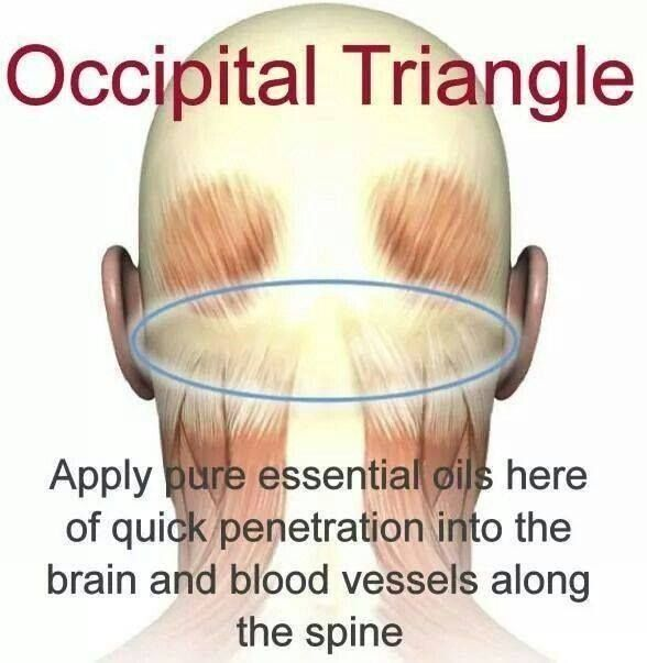 """""""The photo shown is a good application location for MANY protocols, especially when using essential oils for headache, anxiety and ADD/ADHD protocols. The suboccipital triangle is in close proximity to arterial blood flow to the brain and key neurological tissue.""""  I've often tried to tell people in words where I used to apply oils for a migraine (I don't get them anymore) and it was hard to explain. This photo does a great job showing the location. by jayne"""