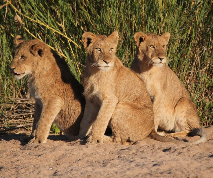 THREE MUSKETEERS AT KRUGER