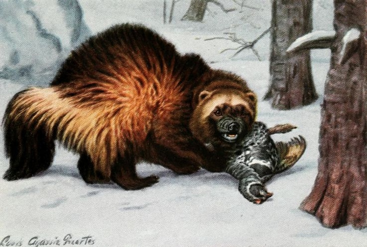 Fuertes, Louis Agassiz (1874-1927) - Burgess Animal Book for Children 1920 (Wolverine). #vintage, #animals, #gulo gulo