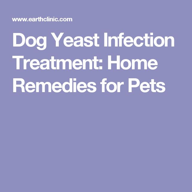 Dog Yeast Infection Treatment: Home Remedies for Pets