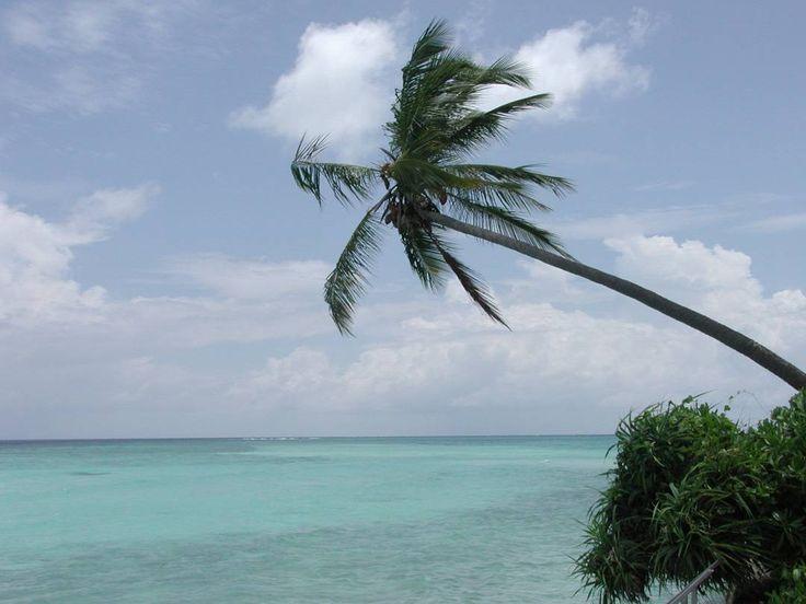 #maldivesislands  #maldive #spiaggia #natura #nature #panorama #panoramaview by luismiano