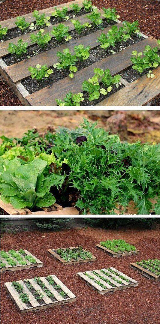 108781 Best Jouw Pins Voor Your Pins For Images On Pinterest Gardening