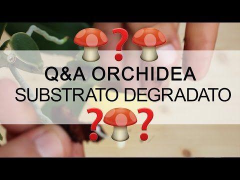 Q&A Orchidea - Come riconosco un substrato degradato ? (FUNGHI) - YouTube