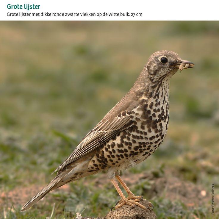 Alle tuinvogels in één oogopslag | Het Grote Vogelweekend van Natuurpunt