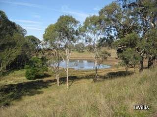 Baragil Lagoon Menangle (I Willis)