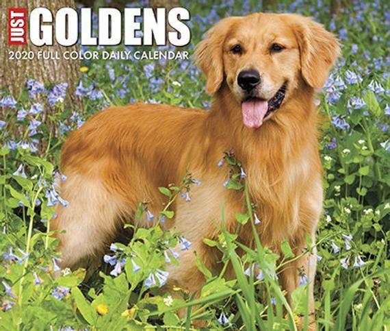 Just Goldens 2020 Daily Box Calendar Willow Creek Dog Calendar
