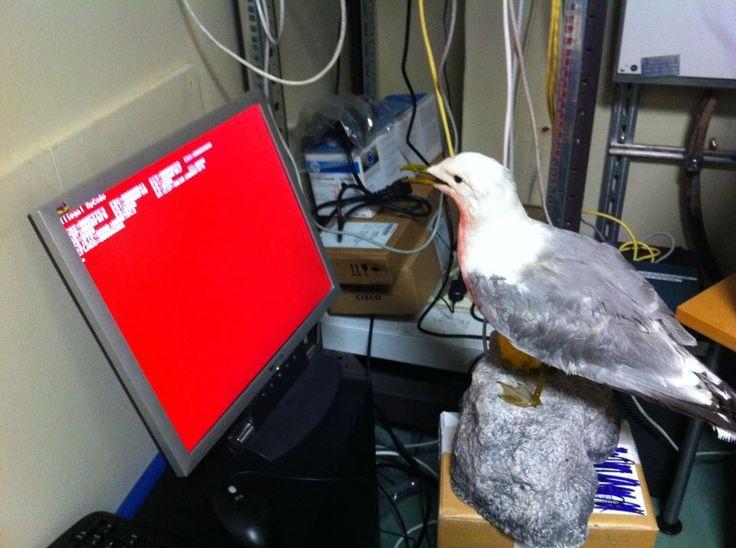 Sometimes a bird just needs to work.