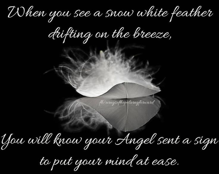 When You See A Snow White Feather Sayings Pinterest