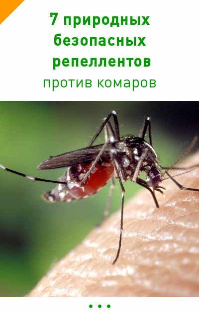 7 природных и неопасных для здоровья человека репеллентов, которые помогут вам избавиться от комаров #безопасный #репелент #лето #комары #природа #дача #дети