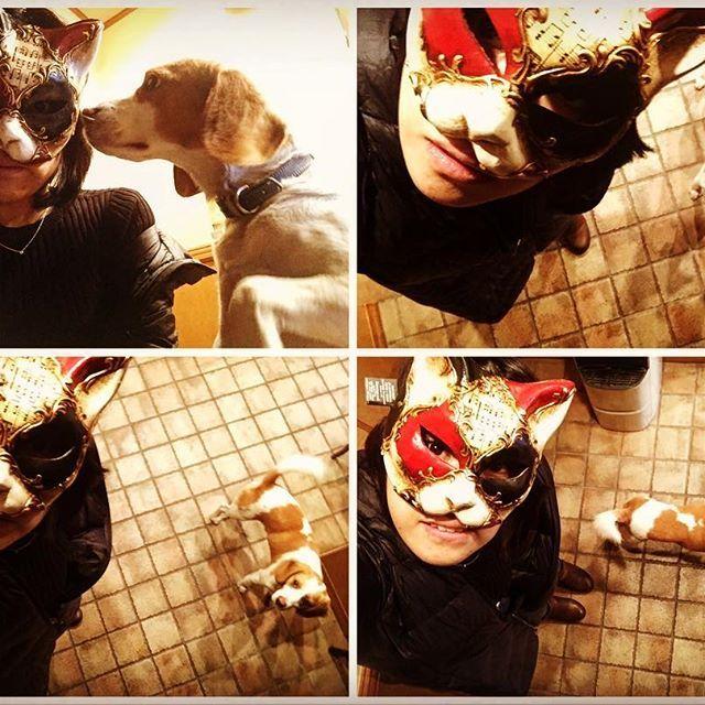#ベネチアンマスク 被って#愛犬 と遊んだ #英吉 相変わらず#ワンパク#犬 去年行った#ベネチア でこのマスク見つけるまで何店舗も#マスク屋 巡りしました  #ビーグル#レモンビーグル#beagle#dog#mask#
