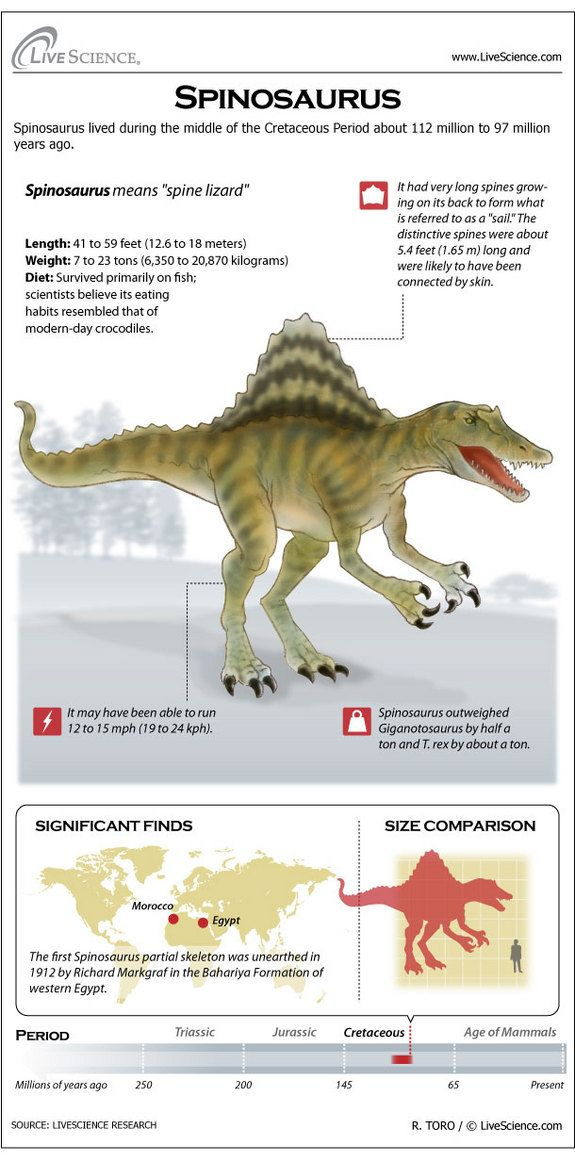 Learn about the prominent back sail, bones, habitat and other secrets of Spinosaurus.