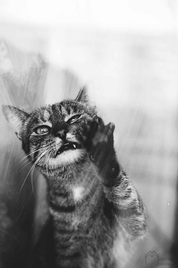 Festmenyek 3d ben 575 - Majestic Black And White Photographs Perfectly Capture The Life Of A Cat