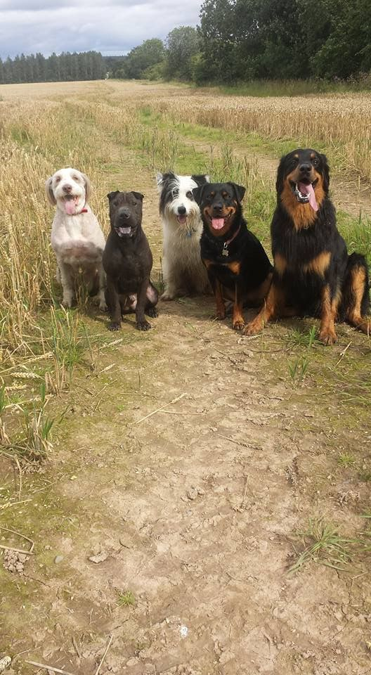 Zach out with his friends!! he's the one of the far right with his tongue hanging out ... such s happy puppy