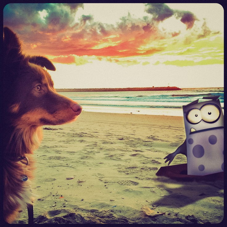 Momo the Mole always popping up where he's not wanted! Grr Ruff! #beach #dog #westcoastsunset #photobomb #spacesports