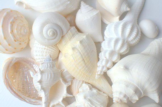 """1lb Seashell blanc Mix pour Beach Wedding-1 """"-4"""" pouce artisanat décoration océan nautique vie naturel éco - réception de coquille de mer"""