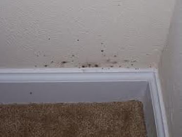 Drywall Mold Removal How To Remove Black Toxic