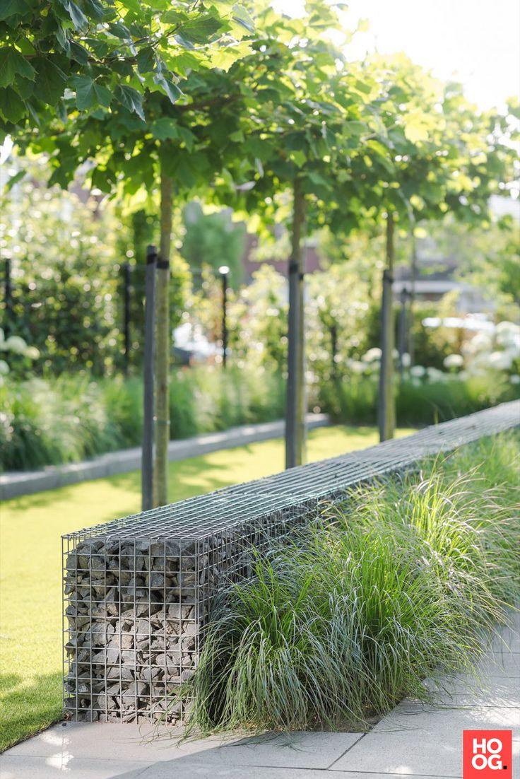 Moderne tuin met gras